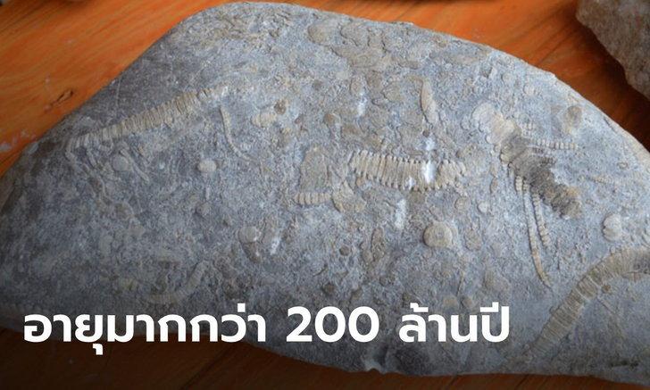 ฮือฮา ชาวบ้านพบซากฟอสซิลดึกดำบรรพ์ อายุมากกว่า 200 ล้านปี ในสวนปาล์ม