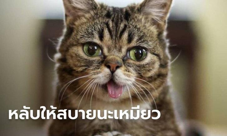 """ทาสแมวสะอื้น """"เจ้าลิลบับ"""" แมวแลบลิ้นในตำนาน สิ้นใจแล้วในวัย 8 ปี"""
