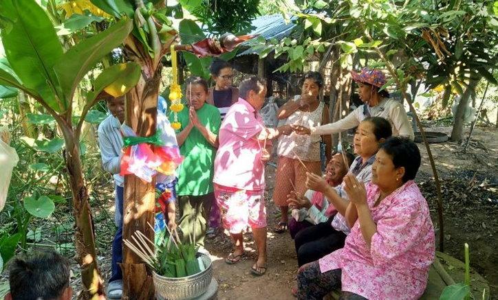 ชาวโคราชแห่ส่องเลขเด็ด ต้นกล้วยประหลาดออกเครือกลางลำต้น
