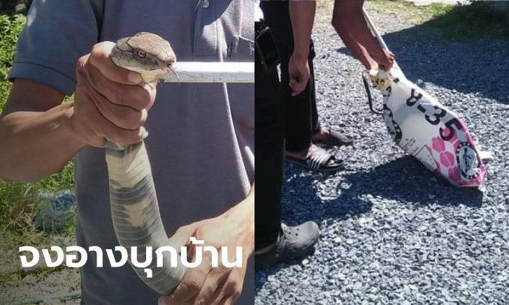 งูจงอางบุกบ้าน! ชายวัย 70 กว่า ผวาสุดชีวิต น้องเลื้อยเข้าใกล้ ก่อนเรียกกู้ภัยจับปล่อยป่า