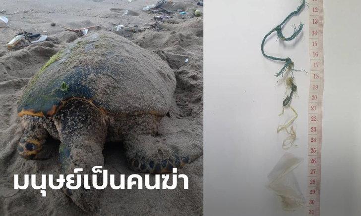 ฝีมือมนุษย์ทั้งนั้น! แม่เต่าเกยตื้นตาย พลาสติกเต็มท้อง-เชือกพันลำไส้ สูญไข่กว่า 200 ฟอง