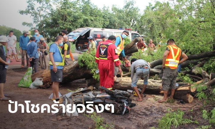 แม่ค้าเคราะห์ร้ายจอดหลบฝน มะขามยักษ์โค่นทับดับสลด กู้ภัยเผยต้นไม้ใหญ่แต่ไร้ราก