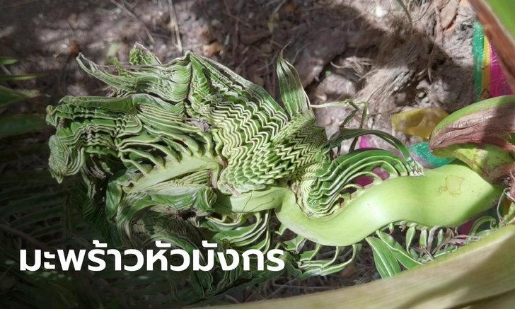 ฮือฮา ต้นมะพร้าวบ้านกำนันงอกเป็นพญามังกร 5 หัว รูปร่างคล้ายลายโอ่ง