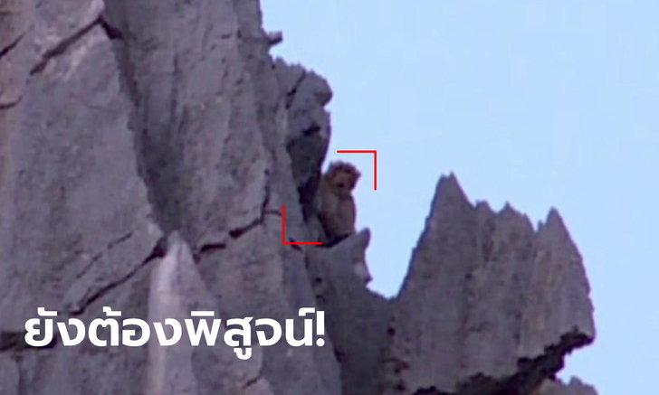 ฮือฮา! พญาวานรโผล่เขาหน่ออีกรอบ กรมอุทยานฯ แจงเคยเจอแต่ลิงแสมหนักสุด 10.5 กก.