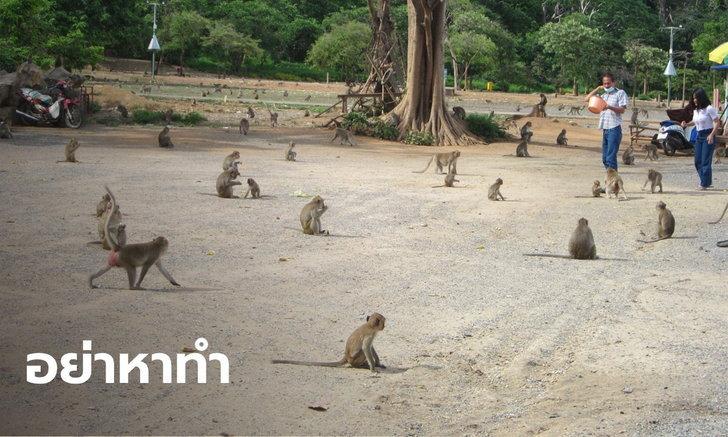 """เปิดอาถรรพ์ขโมย """"ลิงเขาหน่อ"""" ไม่รถคว่ำตายกลางทาง ก็มีเหตุให้ชีวิตวิบัติ"""