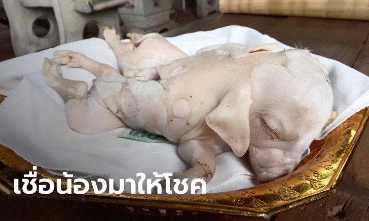 ลูกหมู 8 ขา | https://tookhuay.com/ เว็บ หวยออนไลน์ ที่ดีที่สุด หวยหุ้น หวยฮานอย หวยลาว