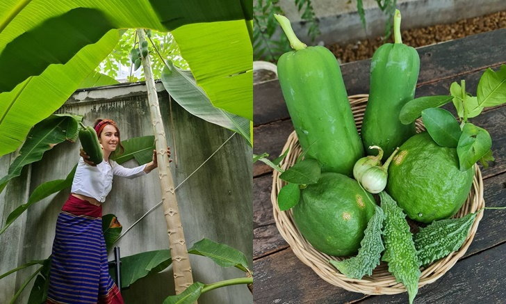 """""""ปาล์มมี่"""" เก็บพืชผักสวนครัวที่บ้าน สีเขียวสดมะนาวลูกใหญ่มาก"""