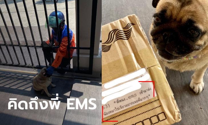 โซเชียลเอ็นดู! หมาหงอย ไปรษณีย์ไม่เล่นด้วยเหมือนคนเดิม เจ้าของต้องระบุหน้ากล่องพัสดุ