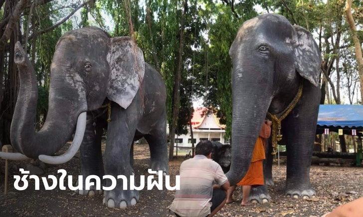 เหลือเชื่อ! สาวตามหาช้างที่เข้าฝันจนเจอ บูชาโซ่คล้องปุ๊บ หายปวดคอเป็นปลิดทิ้ง