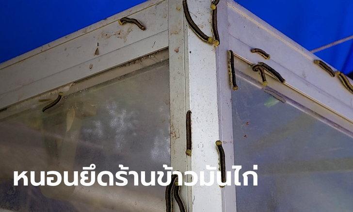 เจ้าของร้านข้าวมันไก่กุมขมับ กองทัพหนอนบุกร้าน ชาวบ้านแห่ขอเก็บไปทำเมนูเด็ด