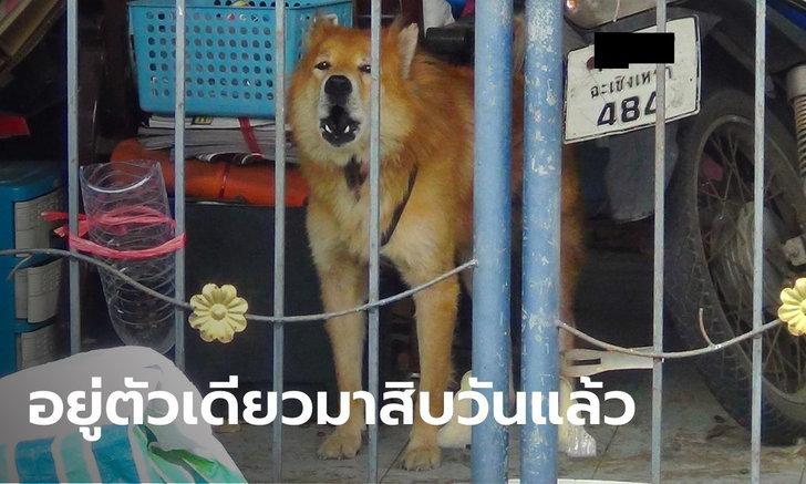 หมาบ้านเดียวดาย เจ้าของป่วยโควิด-19 ยกครอบครัว ต้องอดมื้อกินมื้อ