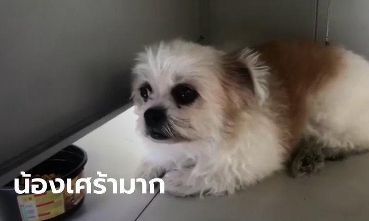 น้องหมาขึ้นโรงพัก พลัดหลงกับเจ้าของ ตำรวจวอนมารับด่วน เพราะน้องซึมไม่ยอมกินข้าว