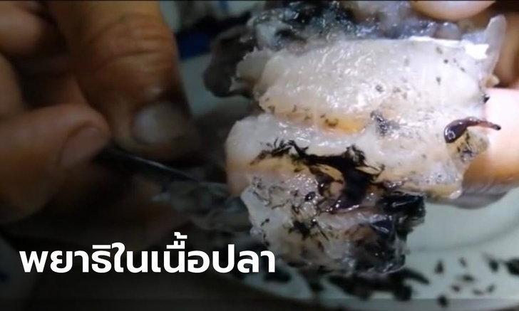สุดสยอง! นักวิจัยเตือน ปลา-กุ้ง-หอย ไม่ควรกินดิบ เสี่ยงพยาธิเพียบ