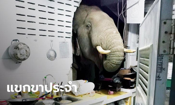 """สาวเล่านาที """"พลายบุญช่วย"""" ช้างป่าบุกพังครัวตอนตี 2 อุทยานฯ สั่งช่วยซ่อมบ้านแล้ว"""