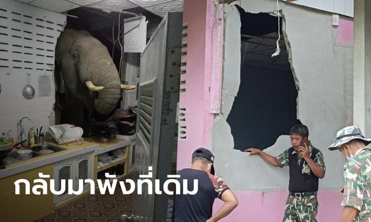 พลายบุญช่วย คัมแบ็ก! บุกพังห้องครัวบ้านหลังเดิม เพิ่งซ่อมเสร็จไม่กี่วัน กำแพงเป็นรูอีกแล้ว