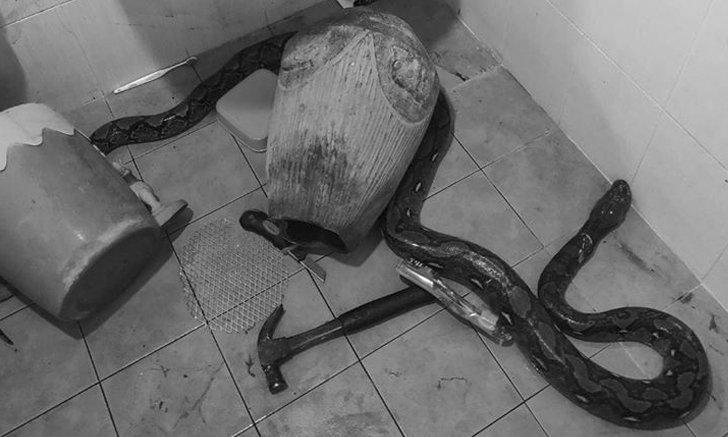 นาทีระทึก! งูยักษ์โผล่ชักโครกกัดต้นขาแม่ สู้จนเลือดสาด ใช้ค้อนทุบ-คัตเตอร์กรีด