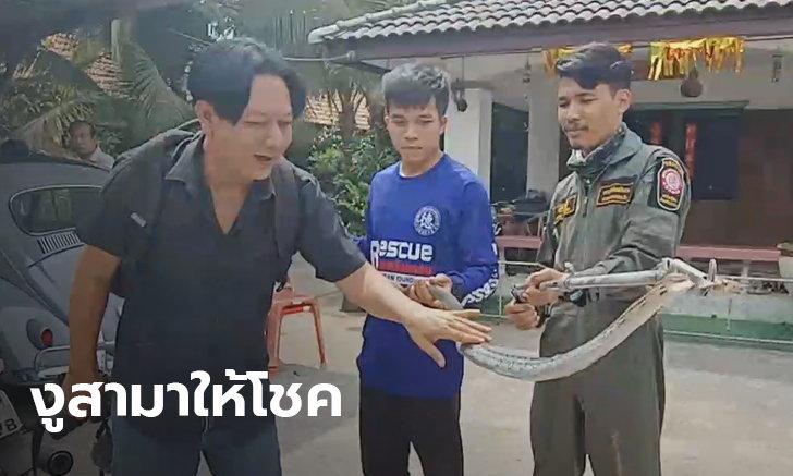 ผลการค้นหารูปภาพสำหรับ งู เข้าบ้านให้หวยถูกเต็มๆ