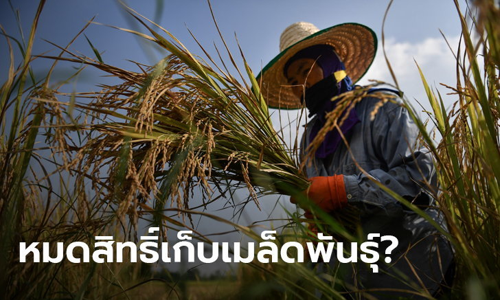 CPTPP ต้องจับตา! สะพัดรัฐบาลเตรียมเซ็นตกลง หวั่นห้ามเกษตรกรไทยเพาะเมล็ดพันธุ์เอง
