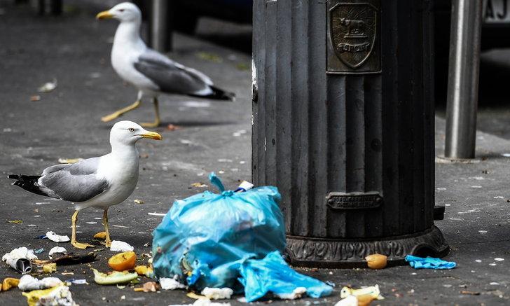 นกนางนวลโรมล่าหนู-นกพิราบ เหตุไม่มีอาหารกิน หลังอิตาลีล็อกดาวน์