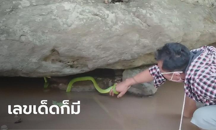 แห่ขอหวยงูเขียวหางไหม้ เริงระบำในน้ำ ชาวบ้านเชื่อเป็น งูเจ้าที่มาให้โชค