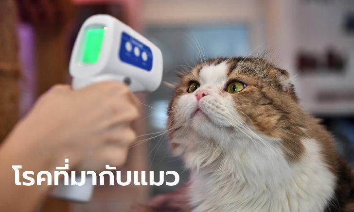 """ทาสแมวต้องระวัง! ศูนย์วิจัยโรคปรสิตพบหนุ่มวัย 30 ติดเชื้อโรค """"ขี้แมวขึ้นสมอง"""""""
