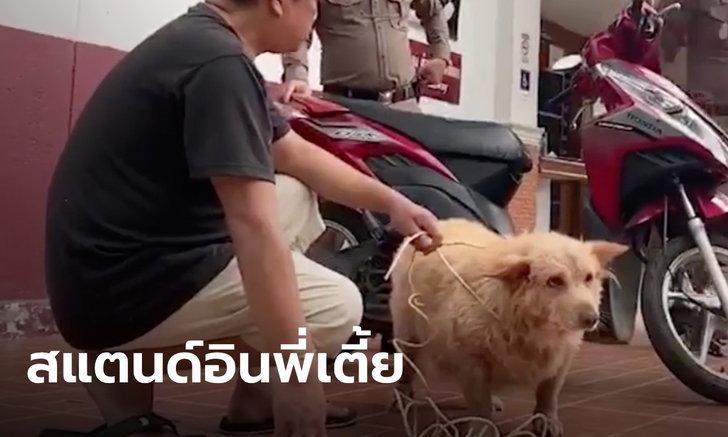 """ตำรวจพิสูจน์หลักฐาน ใช้หมาจริงจำลองเหตุการณ์ ไขคดี """"เตี้ย มช."""""""