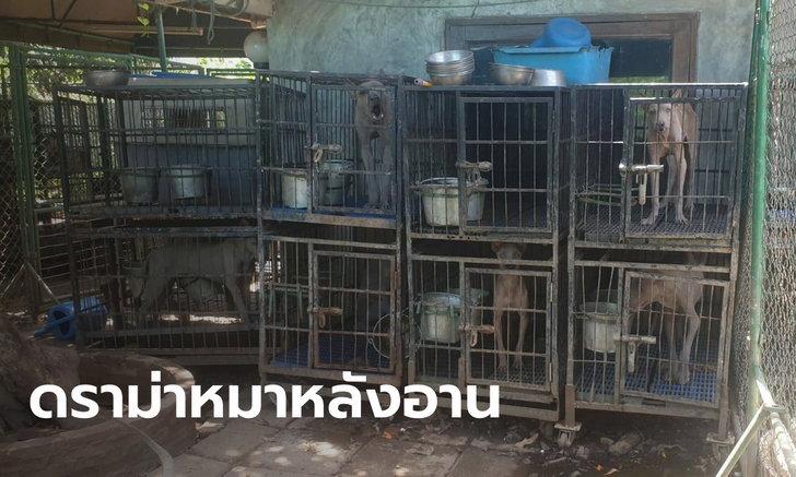 วอชด็อกช่วยหมาไทยหลังอาน 50 ตัว เฒ่าฝรั่งเพาะขาย ปล่อยอดอยากน่าเวทนา