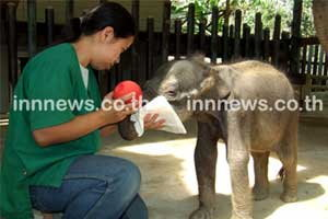 ช้างน้อยดานเต้ สุขภาพเริ่มดีขึ้น