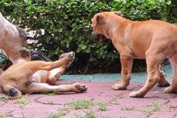ตร.สั่งจับหมาแม่ลูกอ่อนพ้น บช.น. กลัวนายเหยียบขี้