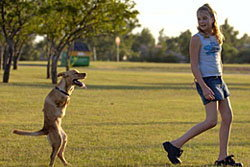ทึ่ง! สุนัขเดินสองขา