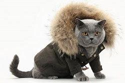 แฟชั่นฤดูหนาวของเหล่าบรรดาแมวเหมียว