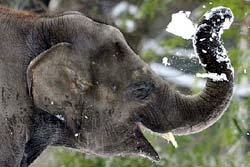 ช้างไทย! เล่นหิมะไกลถึงเมืองเบียร์
