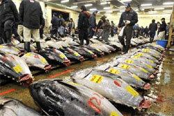 ตะลึง! ปลาทูน่าราคา 12 ล้านบาท
