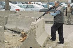 ฆ่าโหด! สุนัขกว่า5หมื่นตัวในอิรัก
