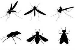 พบอีก! ผัว-เมียป่วยประหลาดแมลงบินออกจากแผล