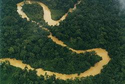 ช็อกโลก! แม่น้ำอเมซอน  ลดฮวบในรอบ 40 ปี