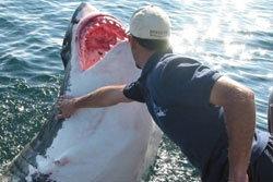 ต่อต้าน!! คนรักฉลามต่อต้านเพื่อมาทำซุป
