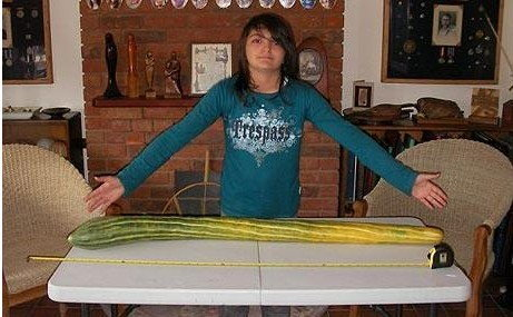 ตะลึง!แตงกวายาวที่สุดในโลก