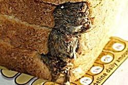 ตะลึง! พบซากหนูตายอยู่ในขนมปังแถว