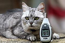 แมวร้องเสียงดังที่สุดในโลก สโมกี้