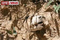 ไม่ตาย!! หมาถูกยิงหัว40นัด จับฝังดินทั้งเป็น