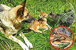 เพื่อนรักต่างสายพันธุ์! กวาง-กระต่าย-สุนัข-แมว