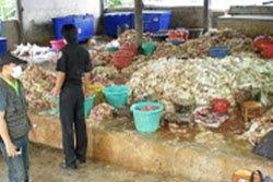 โรงงานชำแหละไก่เถื่อน รับซื้อซากไก่ตายไปขายต่อ