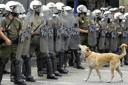 กำลังดัง! ลูคานิคอส หมาประท้วงการเมือง