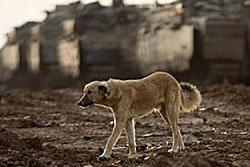 ประหารสุนัข เชื่อเป็นทนายหมิ่นศาลกลับชาติมาเกิด