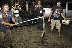 ตะลึง! งูเห่ายาว 2 เมตรซ่อนอยู่ในห้องพระ