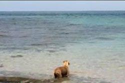คลิปเด็ด! หมาดำน้ำไล่กัดฉลามในทะเล