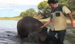 เจ้าของถูกฮิปโปที่เลี้ยงไว้ขย้ำจนเสียชีวิตในแอฟริกาใต้