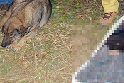 ซึ้ง! สุนัขนอนเฝ้าศพนายถูกต้นไม้ทับดับไม่ห่าง