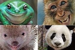 รวมภาพเหล่าสัตว์ทักปีใหม่ด้วยรอยยิ้ม